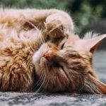 catboost machine learning algorithm